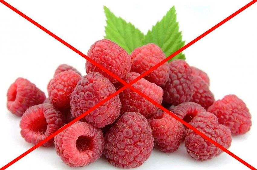 Малина при грудном вскармливании ценность ягоды для мамы и малыша