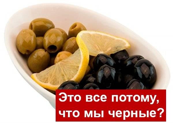 Маслины — польза и вред свежих, консервированных, калорийность | здоровье и красота