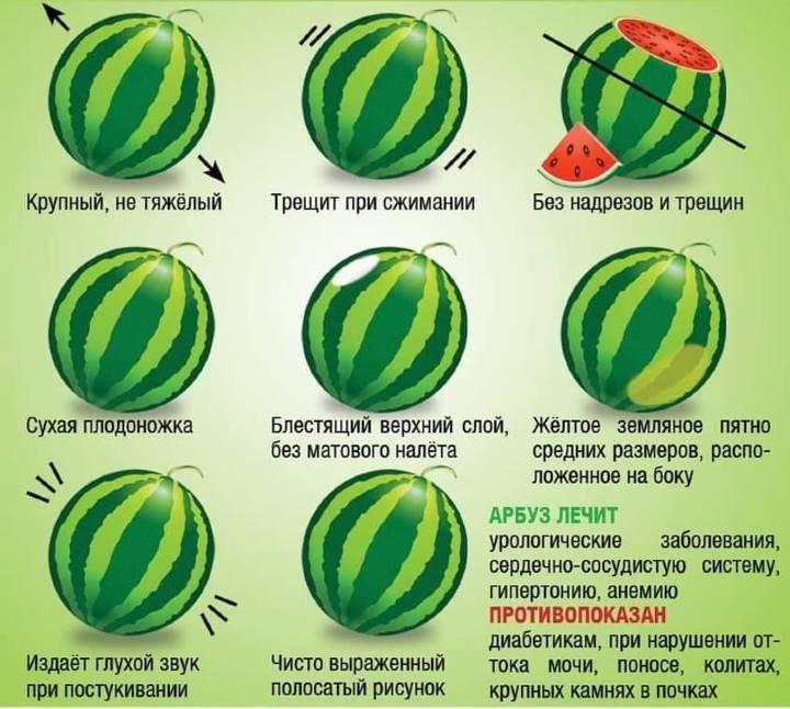 Как выбрать арбуз – советы, рекомендации и хитрости. как выбрать вкусный арбуз: методика определения сладких и спелых арбузов