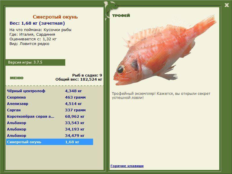 Морской окунь - что за рыба, рецепты, польза и вред