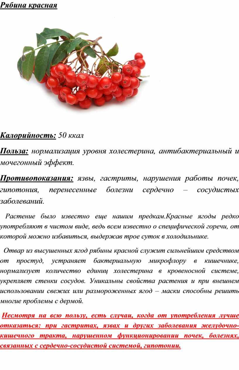 Черноплодная рябина на страже здоровья: состав, польза, народные рецепты