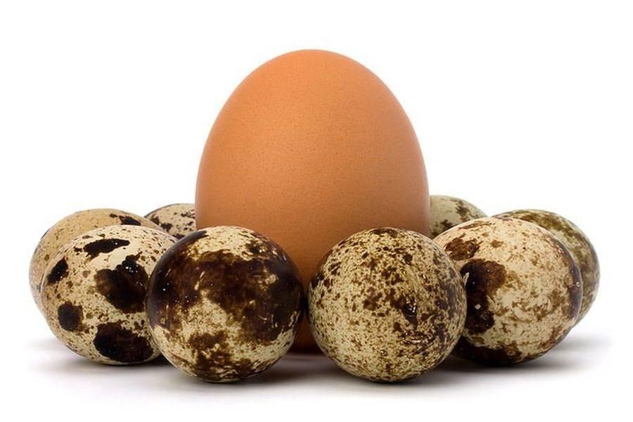 Перепелиные яйца при грудном вскармливании