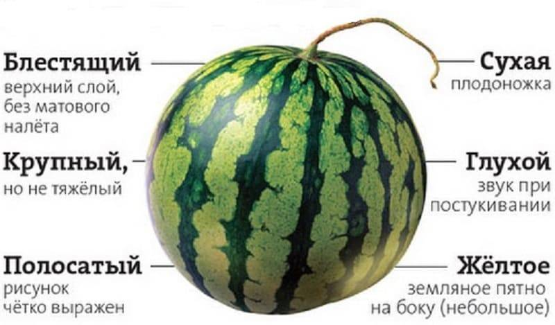 Лайфхак: как выбрать самый спелый и сладкий арбуз