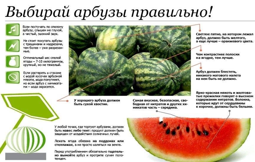 Как правильно выбрать арбуз, спелый и сладкий: критерии выбора