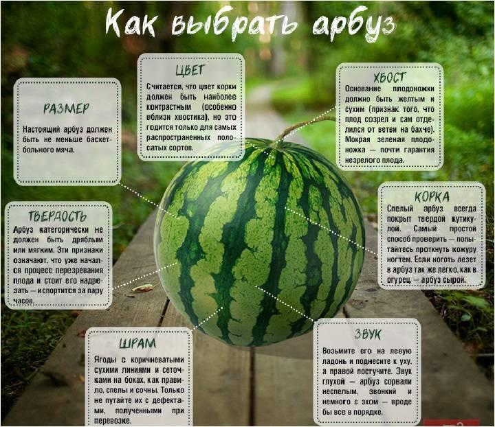 Как выбрать арбуз — определяем спелость и сладость