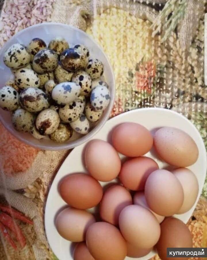 Можно ли кушать яйца при грудном вскармливании новорожденного?
