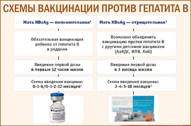Прививка от гепатита в для взрослых: сколько она действует и как защищает от болезни