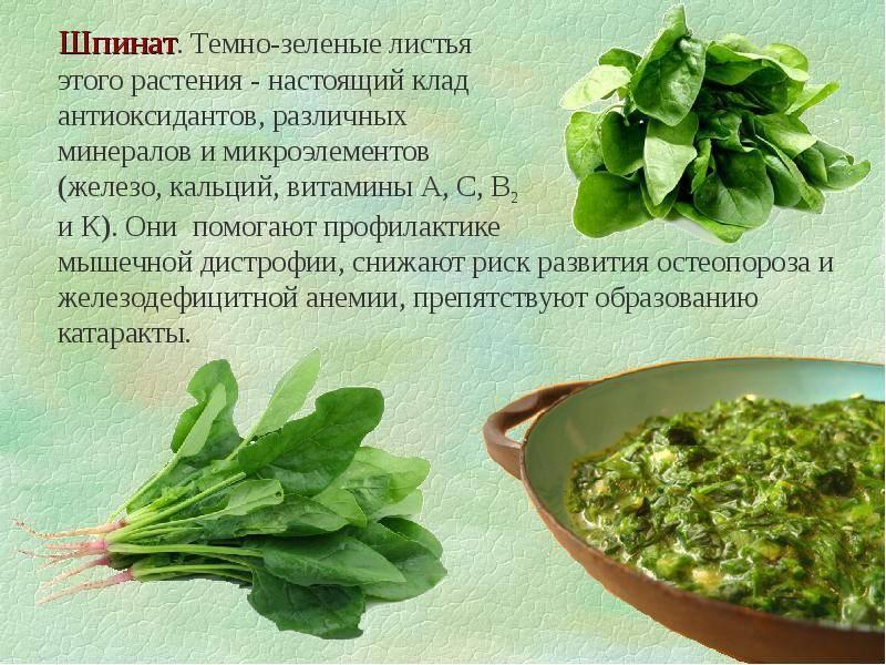 Шпинат: полезные и вредные свойства травы   food and health
